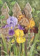 Irises and Butterfly by Martin Ryan