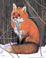Fox, snow, winter