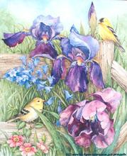 Goldfinch with Irises by Lorraine Ryan