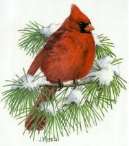 Cardinal, snow, evergreen sprig