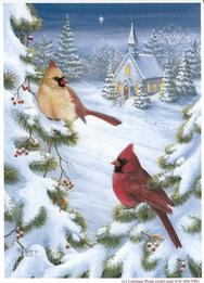Cardinals, Snow, Evergreen, Church