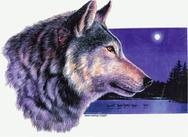 Wolf design by Barbara Gibson