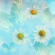blue butterflies, white daisies on blue