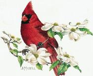 Cardinal on Dogwood Branch