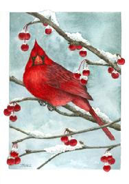 Cardinal, berries, snow, branch