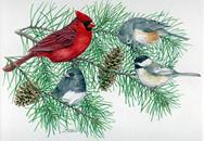 Cardinal, chickadee,m birds on pine branch with pine cones
