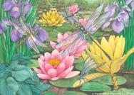 waterlilies, dragonflies, water, flowers