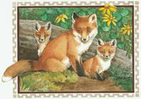red fox and babies