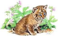 bobkitten, bobcat baby in flowers