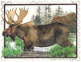 Moose, Marsh, Grass