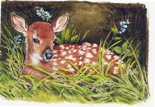 Fawn lying in the grass