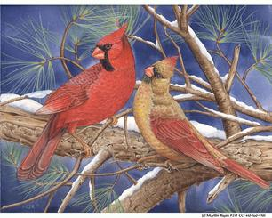 Cardinals, snowy branch, evergreen, night sky