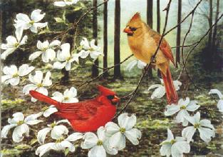 cardinals, dogwood, woods