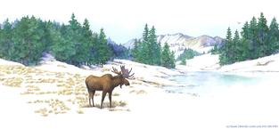 Moose, snow, winter, trees