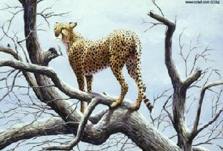 Cheetah in tree