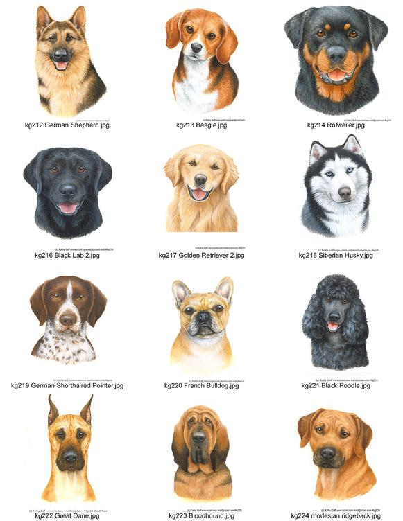 A variety of Dog Portraits by Kathy Goff.