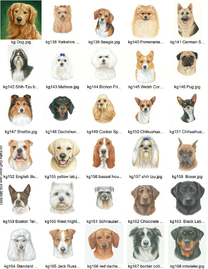 Popular Dog Breed Portraits